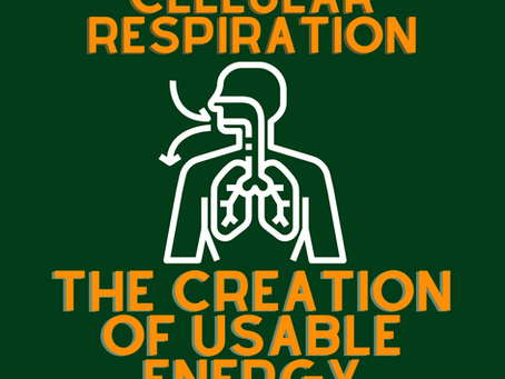 Illustrating Cellular Respiration