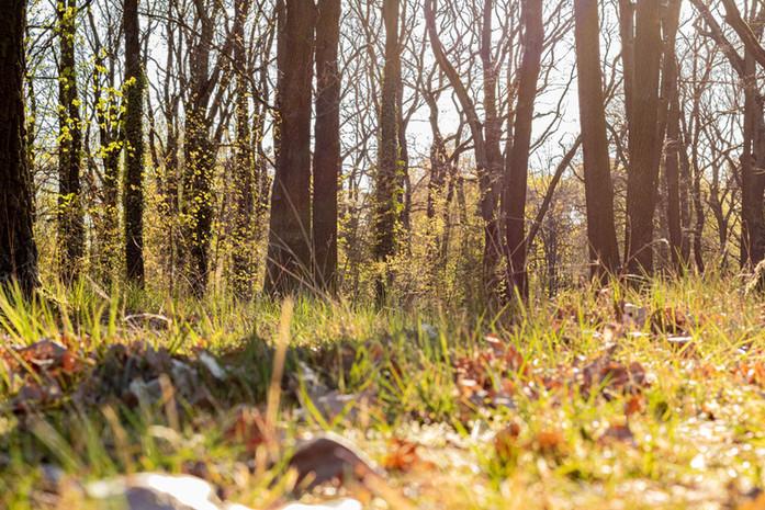 Spring is coming to Berlin-Wuhlheide
