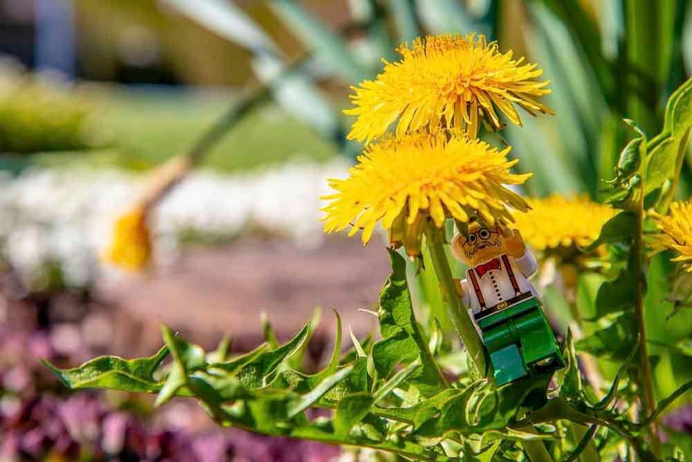 Professor braucht Pflanzenproben Lego