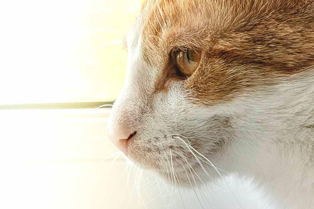 Skadi window portrait animal portrait natural light cat