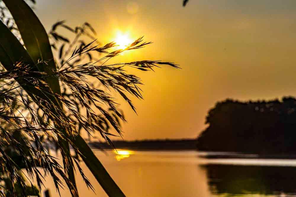 Die Morgensonne bricht durch Gräser am Ufer des Breiten Luzin in der Feldbeger Seenlandschaft, spiegelglattes Wasser und das gegenüberliegende Ufer sind zu erkennen