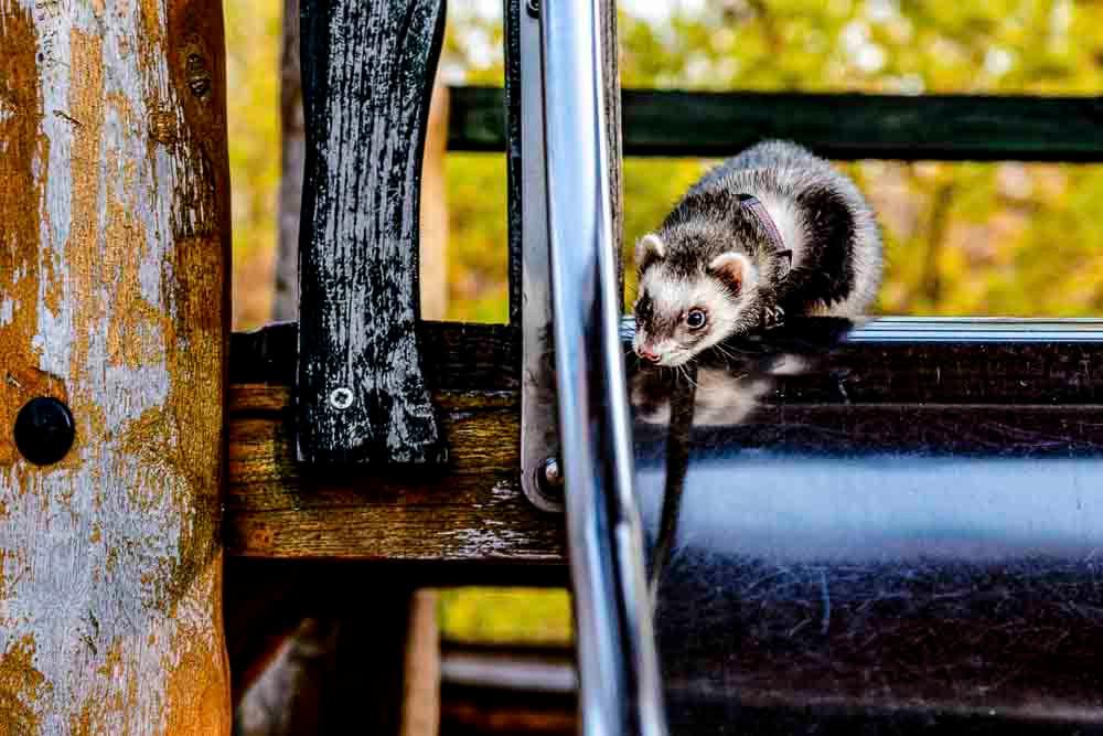 Frigga curious on the slide