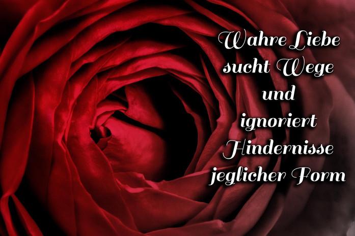 Rote Rose Zentrum Detailaufnahme Blueten Text Wahre Liebe