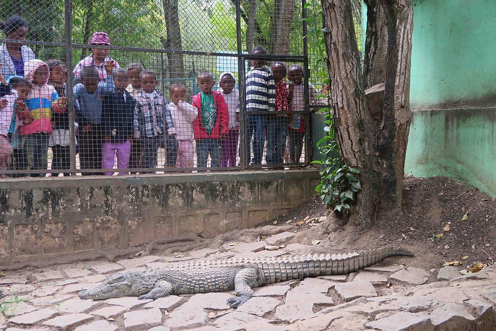 Crocodile dans un zoo à Madagascar