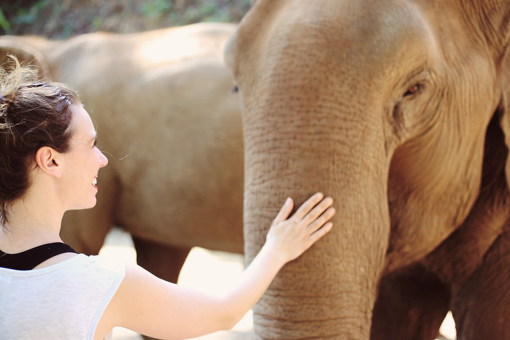 Elephant Encounters at Elephant Nature Park in Chiang Mai, Thailand