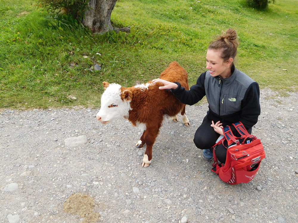 One of our campsites had its very own cow! How often do you get that at a hotel?!