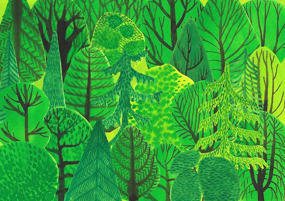 Pani Jurek drzewa1.jpg