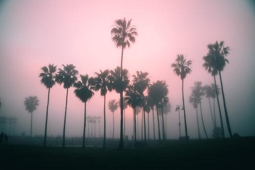 Moody Venice Beach 4