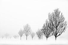 3° - Scoca Domenico - Fog -