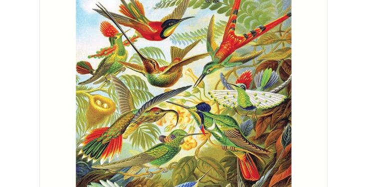 Haeckel 99 Hummingbirds Print