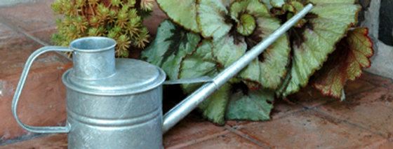 Galvanized Greenhouse Watering Can