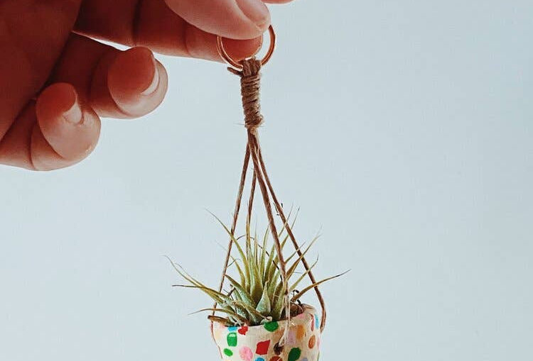 Mini Car Plants
