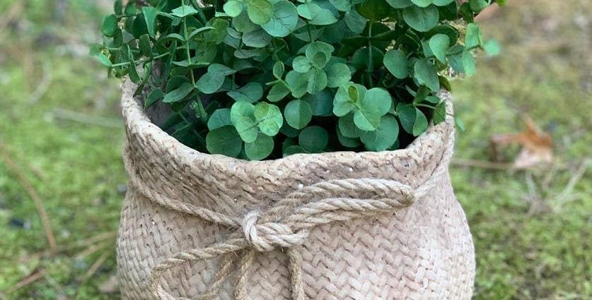 Faux Cement Sack Planter