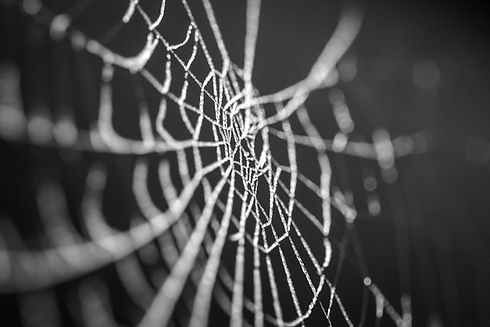 Spiderweb_edited.jpg