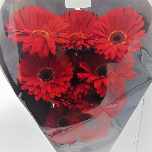 Carded Gerbera's Solid Colour (Full Pail)