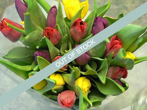 Pack 7 Rainbow Tulip Case