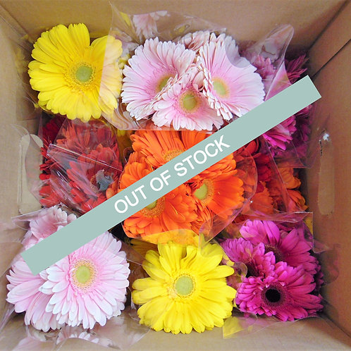 Assorted Gerbera Case