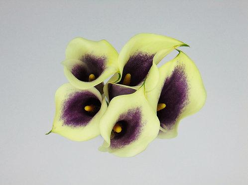 5 Stem Calla's - Solid Colour (Full Pail)