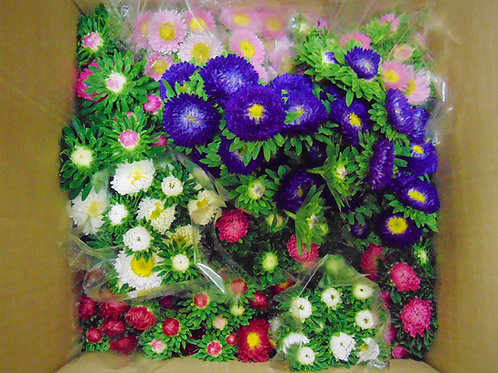 Aster's- Half Pail Assorted Colours
