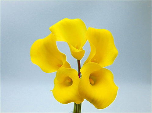 5 Stem Calla's - Solid Colour (1/2 Pail)