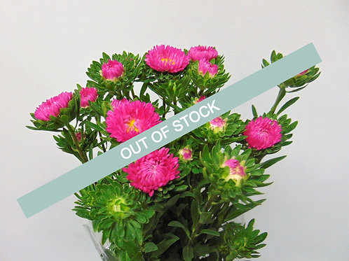 Aster's - Full Pail (Solid Colour)