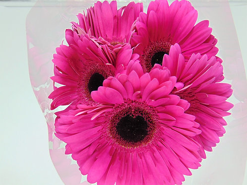 5 Stem Gerbera Bunches (Full Pail)
