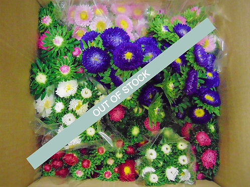 Aster's- Full Pail Assorted Colours