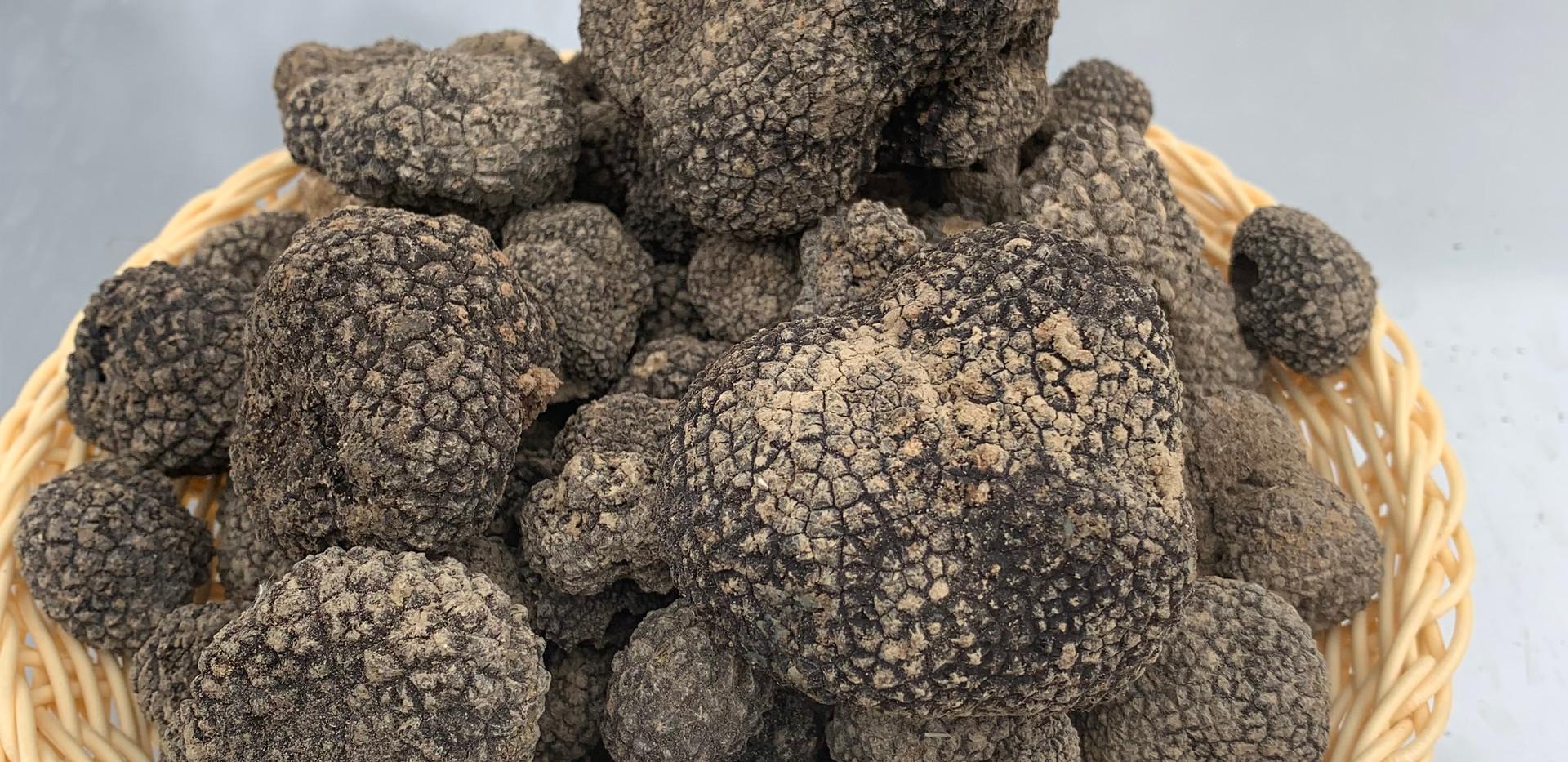 Umbrian Truffles
