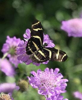 Butterfly Blliss