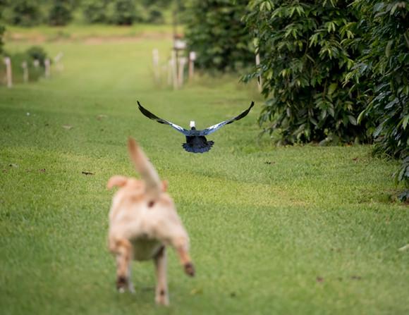 Dog Chasing Bird