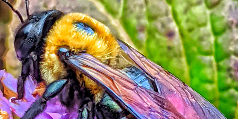 Pollinator Power! Jewish Learning About the Smallest Critters Microgrant Recipient