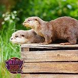 OtterIcon.jpg