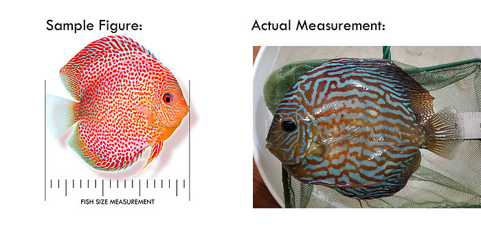 fish size Comaprisson copy.jpg
