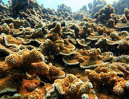SaltStrong: How A Teenager With Braces Is Altering The Future Of Coral Reefs