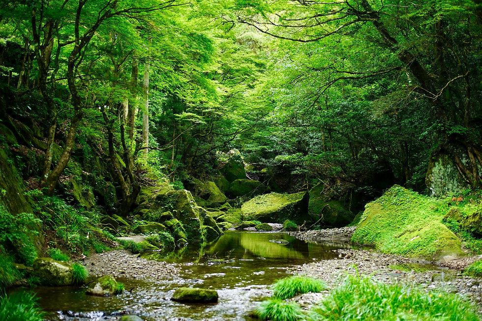 Green River5.jpeg