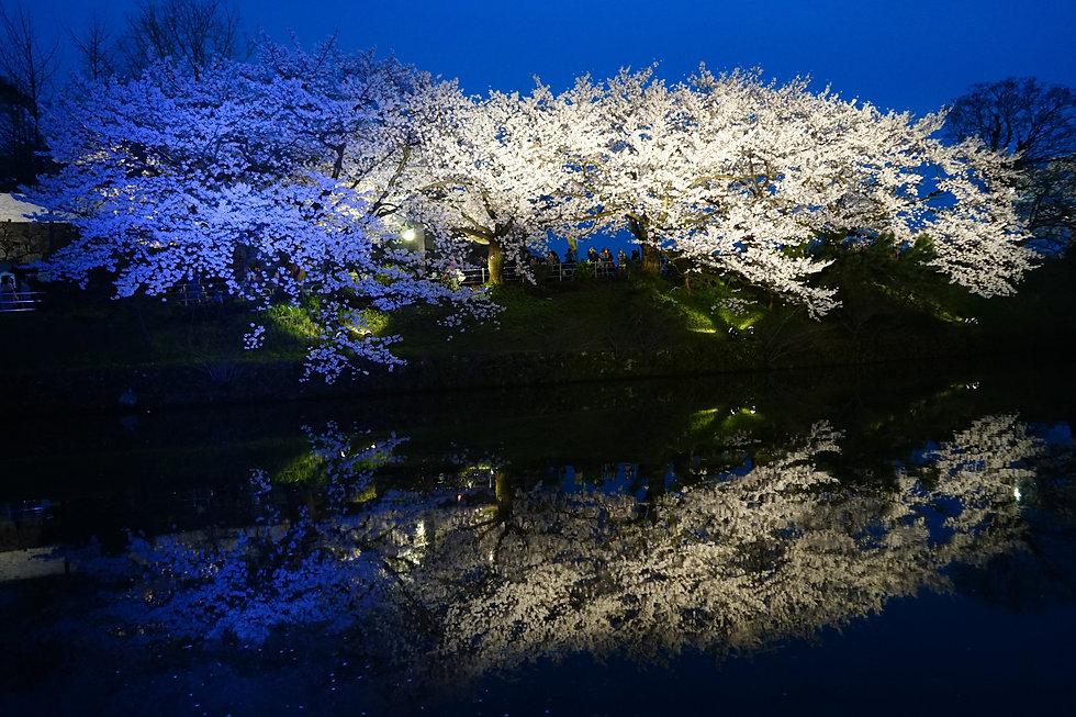 Night Cherry Blue Illumination .jpeg