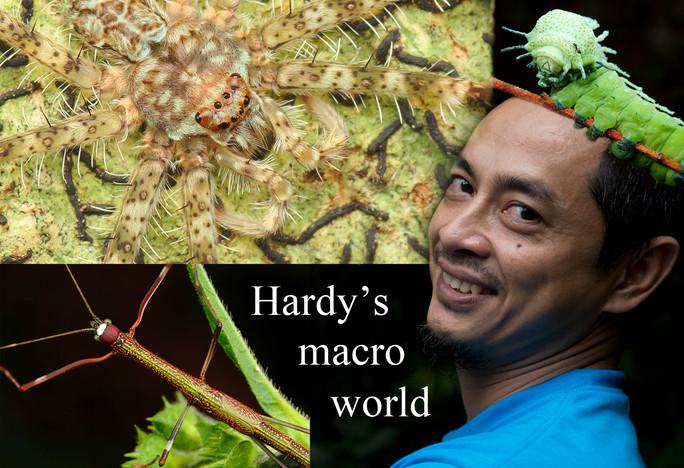 Malaysia's magical macro world