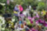 Orchid garden in Seremban, Malaysia
