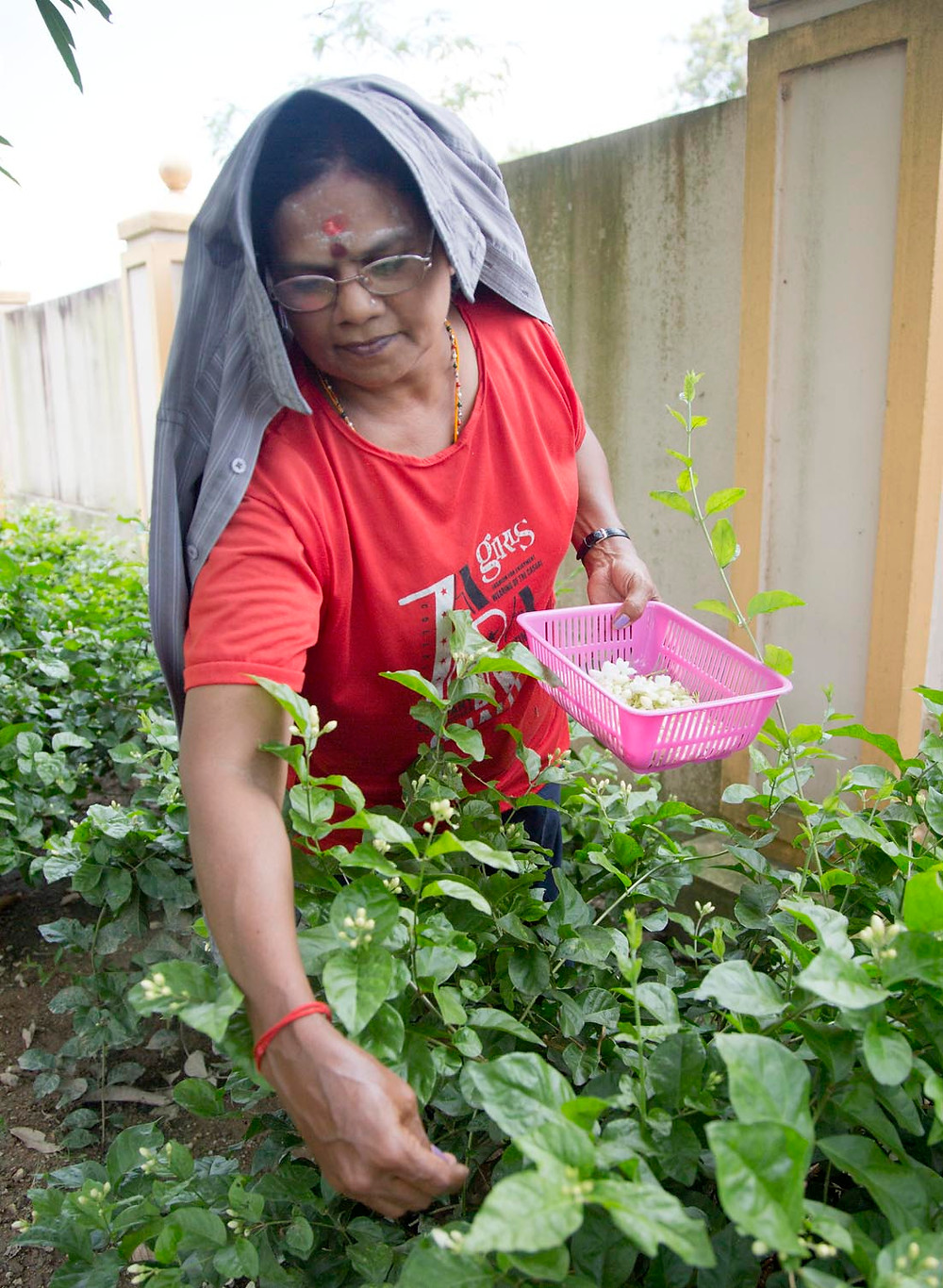 serembanonline photograph of a lady picking Jasmine flowers at Vinashini Home photograph by nicaliss Nic Falconer