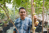Fig farming takes root in Malaysia
