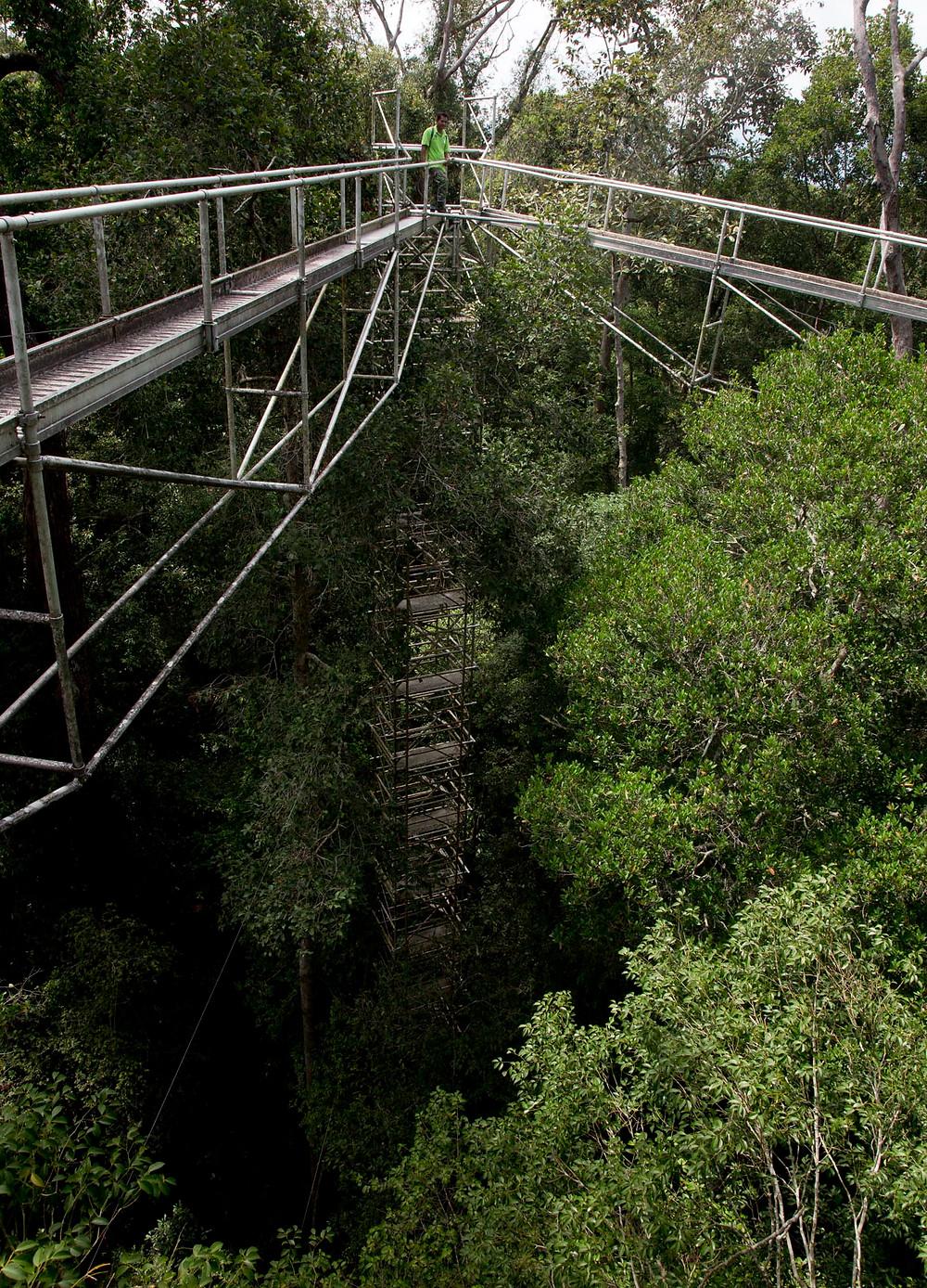negeri sembilan photography nicaliss seremban photographer serembanonline FRIM Nic Falconer canopy walkway at FRIM