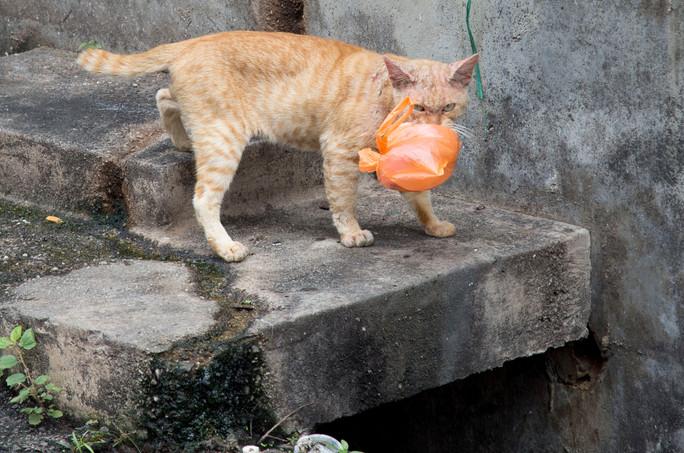 Malacca says good bye to plastic