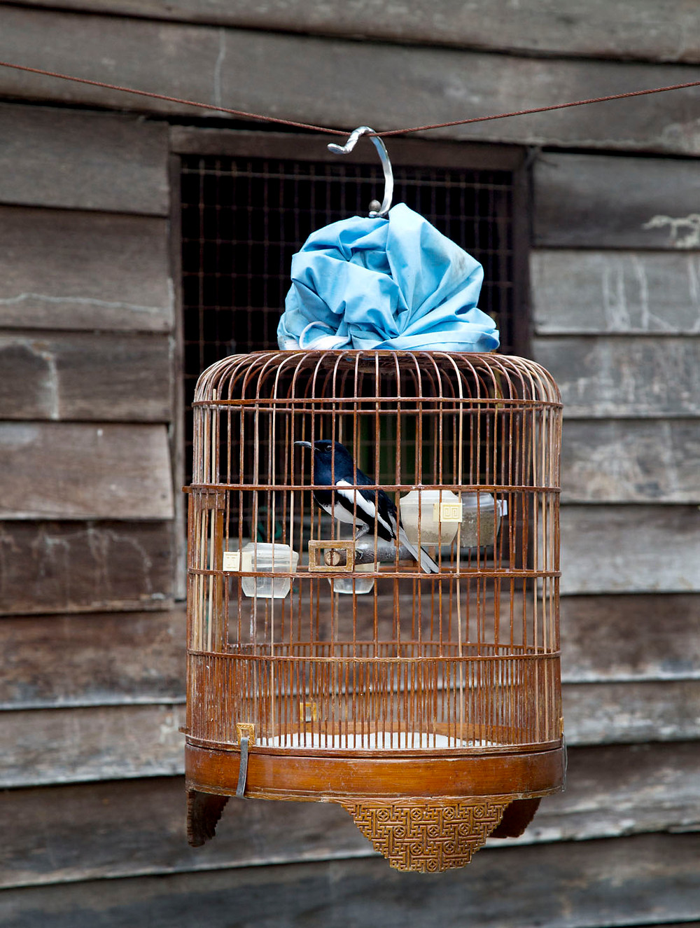 A serembanonline.com photograph of  a birdcage by photographer Nic Falconer nicaliss