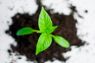 Fast Growing Organizations