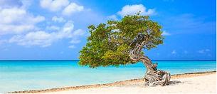 Aruba big.JPG