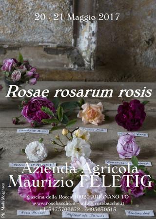 Nericata partecipa a Rosae Rosarum Rosis - Arignano (TO), 20-21 maggio 2017