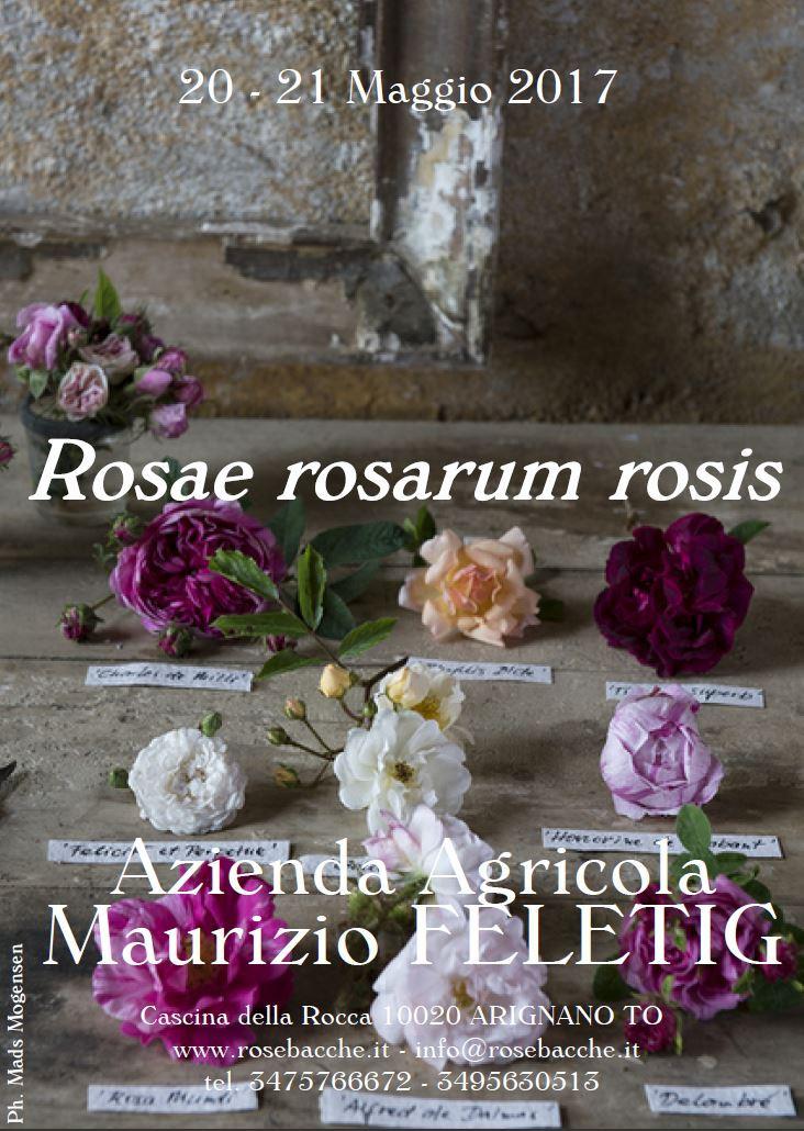 Nericata partecipa a Rosae Rosarum Rosis - Arignano (TO), 20 e 21 maggio 2017