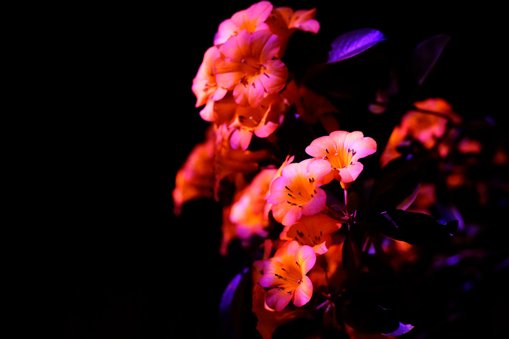Autumn_Lights022.JPG