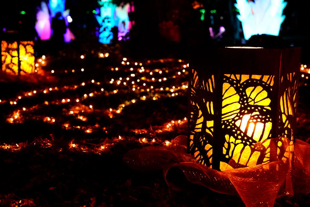 Autumn_Lights010.JPG