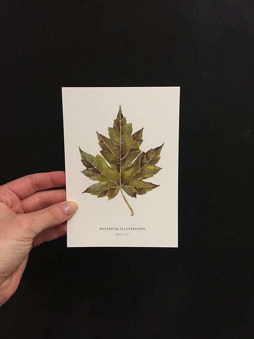 Postkarte 'Maple leaf'